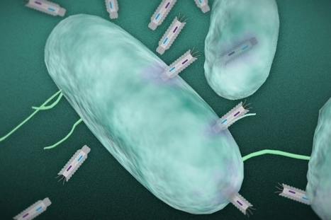Researchers develop a new means of killing harmful bacteria   Salud Publica   Scoop.it