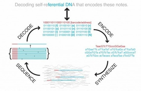 Harvard cracks DNA storage, crams 700 terabytes of data into a single gram | Social Foraging | Scoop.it