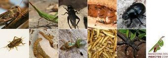 si on mangeait des insectes ? / le mouv'   Entomophagy: Edible Insects and the Future of Food   Scoop.it
