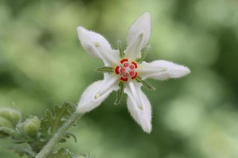Plants are 'biting' back   Erba Volant - Applied Plant Science   Scoop.it
