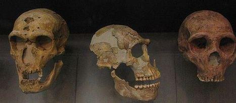 El cerebro sapiens estaba más adaptado a la vida social y el neandertal a la escasez de luz.   Aux origines   Scoop.it