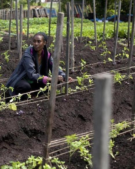 Urban farming takes root - Boston Globe | Progressive Education | Scoop.it