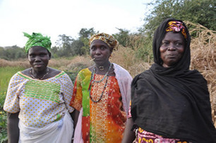 THE GAMBIA: Meet Kinsa Sidibeh, an SRI farmer in Central River Region South | Selected News from SRI-Rice: April 2016 **sririce.org | Scoop.it
