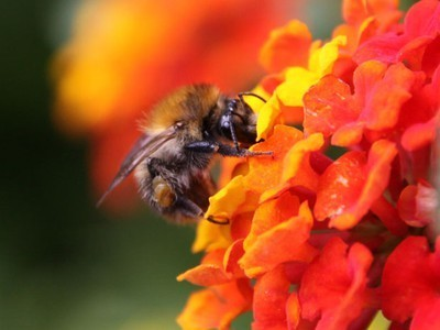 Bumblebee Flight Paths Could Inspire Faster Computers | Biomimetics | Scoop.it