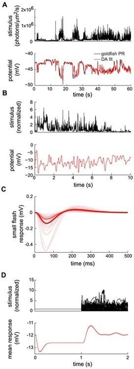 Dynamical Adaptation in Photoreceptors | Social Foraging | Scoop.it