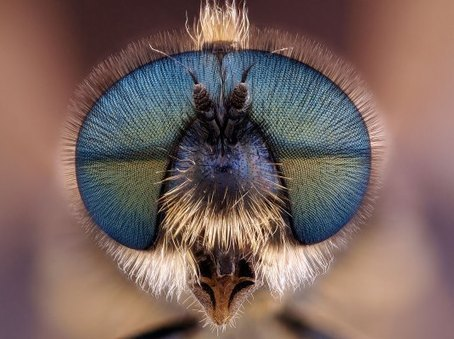 Tiny Beauties: Visions From Under the Microscope | TIME.com | Something | Scoop.it