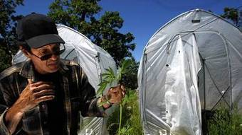 Mendocino County spars with feds over conflicting marijuana laws - Los Angeles Times | Mendocino County Living | Scoop.it