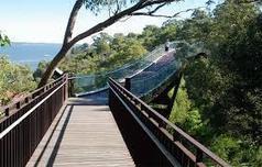 glass walkway kings park - Google Search | Kings Park History | Scoop.it