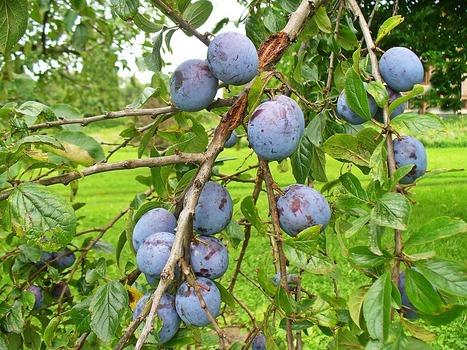 Sommaire des bulletins techniques arbo Bio | Arboriculture: quoi de neuf? | Scoop.it
