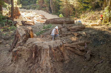 Restoring the Forest to Benefit Wildlife, People, Climate | Our Evolving Earth | Scoop.it