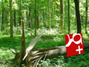 If A Social Network Falls In A Forest… | TechCrunch | Entrepreneurship, Innovation | Scoop.it