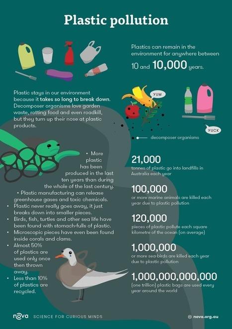 Plastic pollution   Marine Litter   Scoop.it