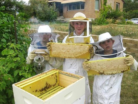 Bees Brothers: Kids Saving Bees & Making Honey and Bitcoin Money - Organic Connections | Healthy Living | Scoop.it