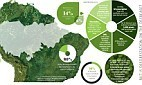 Has the Amazon rainforest 'stopped disappearing' and started to mend? - Metro | Southern Hemisphere | Scoop.it