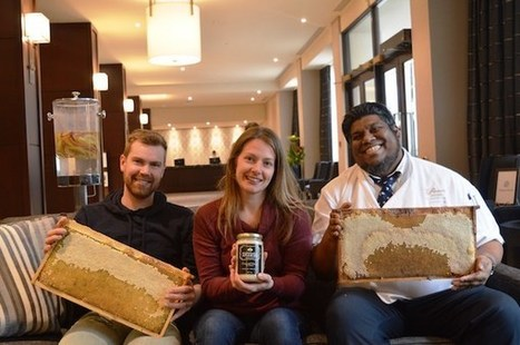 Beehive Project Creating Buzz on Roof of Winnipeg Hotel | Winnipeg Market Update | Scoop.it