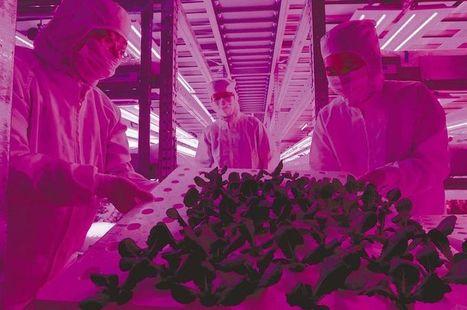 Vegetable factory opens near ruined N-plant | Vertical Farm - Food Factory | Scoop.it