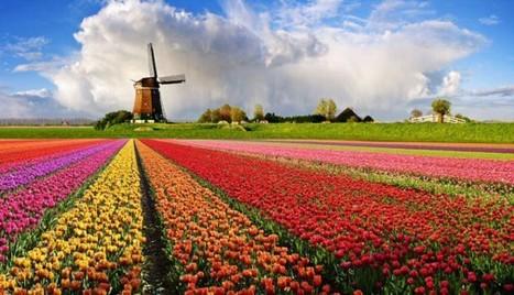 Concurso: Como ganhar passagens para estudar na Holanda - Agregador De Viagem | Portal Colaborativo Favas Contadas | Scoop.it