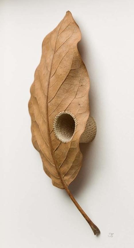 Susanna Bauer Hand Stitches, Nurtures and Embellishes Fallen Leaves | Art Installation | Scoop.it