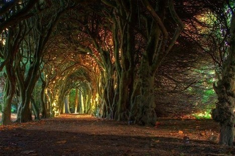 Fairytale-Tree-Tunnel-Ireland-620x411.jpg (620x411 pixels) | Awesome Photography | Scoop.it