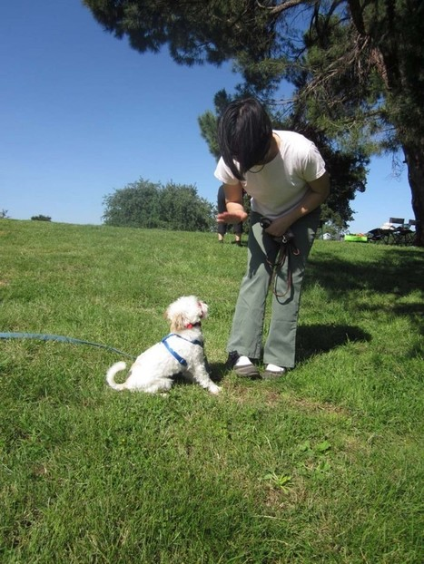 Obedience Dog Training Courses | Obedience Dog Training | Scoop.it
