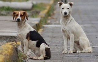 Animales callejeros, grave problema de salud pública en Xalapa - Veracruzanos.info | Veterinaria | Scoop.it
