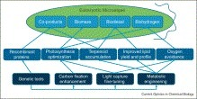 Advances in microalgae engineering and synthetic biology applications for biofuel production | SynBioFromLeukipposInstitute | Scoop.it