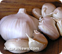 Garlic more effective than antibiotics against food poisoning bacteria | Arun Thai Natural Health | Scoop.it