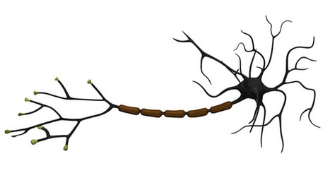 Bladder Drug Re-Grows Myelin, Could Help Ease Multiple Sclerosis Symptoms   Drug discovery and drug safety   Scoop.it