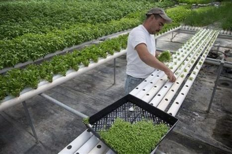 Dry Nevada seeing green in indoor farming | Elko Daily (NV) | CALS in the News | Scoop.it