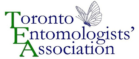 Ontario Insects | Interesting | Scoop.it