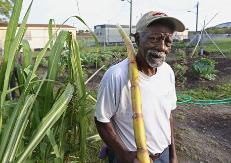 How does John Hopkins Middle School's garden grow in Tampa Bay? With Mr. Mac's help | School Gardening Resources | Scoop.it