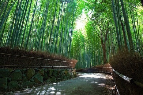 The Best Bamboo for You: A Guide to Buying Bamboo for the Home   bamboo fabric   Scoop.it