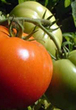 """HowStuffWorks """"Vegetables"""" 