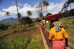 FAO - De nouvelles approches sont nécessaires pour faire face au changement climatique | Action humanitaire dans le monde et ONG | Scoop.it