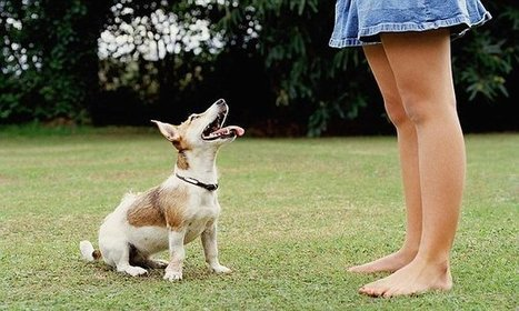 Researchers find dogs ignore bad advice from their owners | Kickin' Kickers | Scoop.it