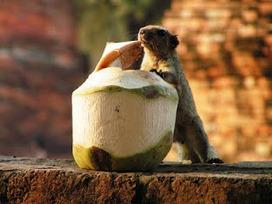 Advaita en Taoïsme: De eekhoorn en de weg naar de vrijheid | Advaita | Scoop.it
