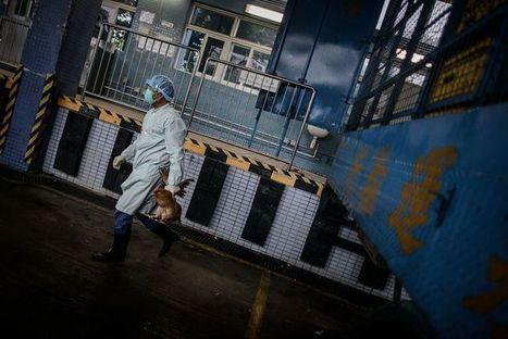 Chine: la grippe aviaire H7N9 se propage, un premier cas à Pékin | Toxique, soyons vigilant ! | Scoop.it