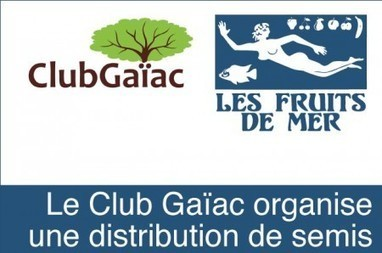 Saint-Martin - Les Fruits de Mer organise au travers du Club Gaïac une distribution de semis | Les infos de SXMINFO.FR | Scoop.it