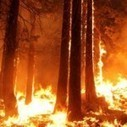 The Ecological Importance of California's Rim Fire - Ecology Global Network | Garry Rogers Nature Conservation News | Scoop.it