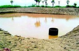 Punjab initiates new steps to expand fish farming - Times of India | Aquaculture Directory | Scoop.it