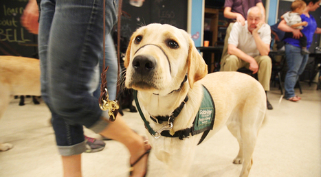 UA Club Helps Train Guide Dogs | UANews | CALS in the News | Scoop.it