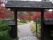 Green Thumb: Japanese Garden site, focus of workshop - Memphis Commercial Appeal | In the garden | Scoop.it