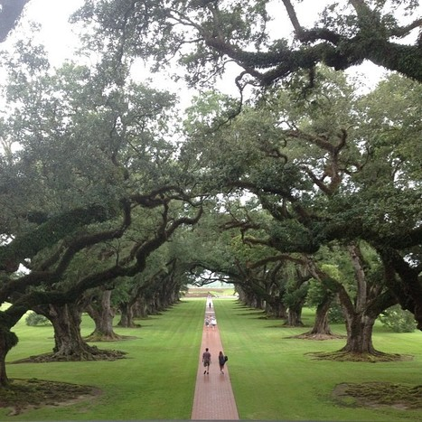 Photo by kellyohalpin • Instagram | Oak Alley Plantation: Things to see! | Scoop.it