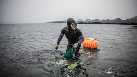 Hardy Divers in Korea Strait, 'Sea Women' Are Dwindling | Geography 200 | Scoop.it