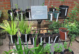 May Dreams Gardens: A gardener would never say... | Annie Haven | Haven Brand | Scoop.it