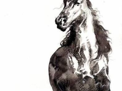 Le cheval, patrimoine immémorial de l'Algérie - El Watan | Cheval et Nature | Scoop.it