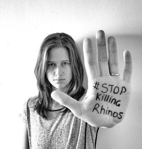 #stopkillingrhinos - Twitter Search | What's Happening to Africa's Rhino? | Scoop.it