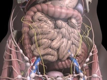 Our intestinal bacteria have national characteristics   Southern Hemisphere   Scoop.it