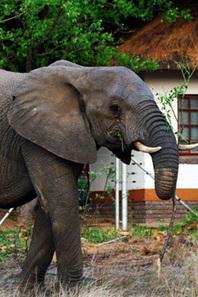 4 day Budget Kruger Park tented safari | Kruger Tours | Kruger & African Wildlife | Scoop.it