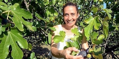 Gard : figues de ci, figues de là, c'est le temps des figues | Maraichage-Horticulture | Scoop.it